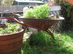 recycled wheelbarrow